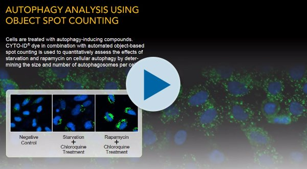 Autophagy Analysis Using Object Spot Counting